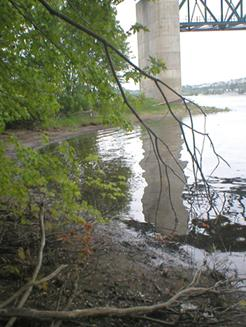 Photo of Skillet Clubtail habitat on the Saint John River at Fredericton, looking downstream.