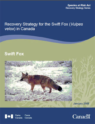 Species at Risk Act recovery strategy series, recovery strategy for the swift fox (Vulpes velox) in Canada (January 2008).