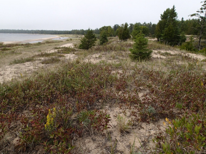 Phtoto of Lake Huron Grasshopper habitat at Shrigley Bay, Manitoulin Island