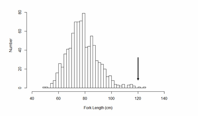 Chart of fork-length frequency distribution for Shortnose Sturgeon caught in the Saint John River