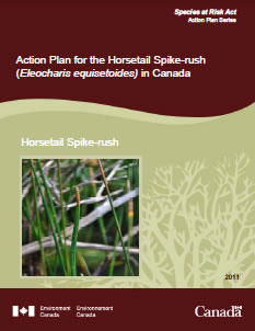 Cover of the publicaiton: Action Plan for the Horsetail Spike-rush (Eleocharis equisetoides) in Canada - 2011