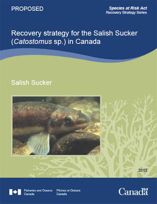 Species at Risk Act recovery strategy series, recovery strategy for the Salish Sucker (Catostomus sp.) in Canada.