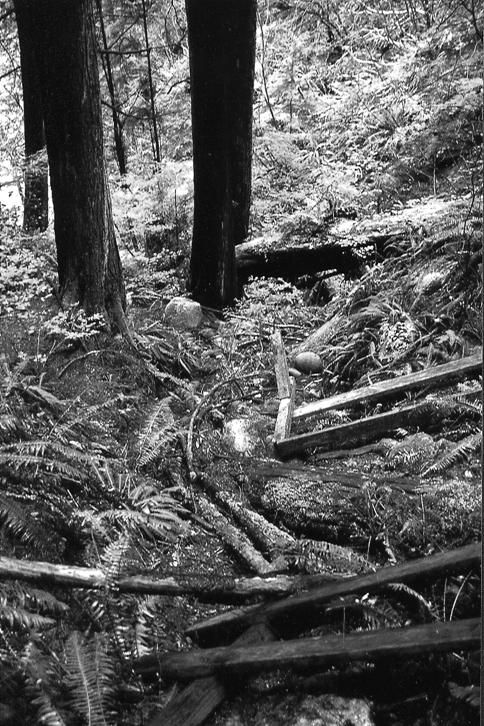 Black and white photo of Poor Pocket Moss habitat at Lynn Canyon showing debris from an old foot bridge.
