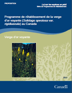 Couverture de la publication : Programme de rétablissement de la verge d'or voyante (Solidago speciosa var. rigidiuscula) au Canada [PROPOSED] – 2011.