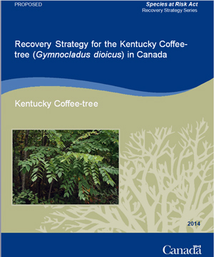 Recovery Strategy for the Kentucky Coffee-tree (Gymnocladus dioicus) in Canada [Proposed] - 2014