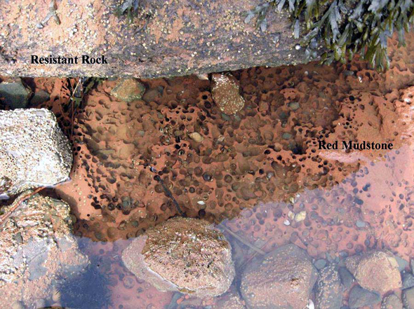 Photo showing how weakening of underlying mudstone by burrowing of Barnea truncata adults can result in collapse of the harder overlaying cap-rock under the weight of ice rafting and settlement.