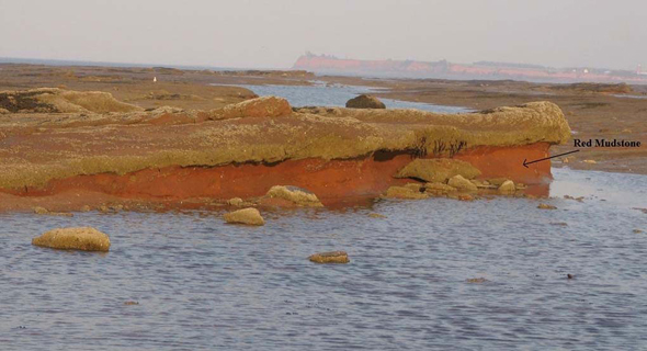 Photo of red-mudstone facies, the only substrate confirmed as supporting Barnea truncata in the Minas Basin. The soft mudstones are overlain by a cap-rock of more durable sandstone. Ice-mediated collapse of the cap is evident in the foreground, and barnacle settlement is apparent on sandstone surfaces.