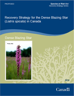 Cover: Recovery Strategy for the Dense Blazing Star in Canada [Proposed] - 2014