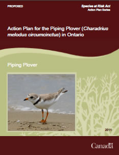 Cover of the publicaiton: Action Plan for the Piping Plover (Charadrius melodus circumcinctus) in Ontario [PROPOSED] – 2011