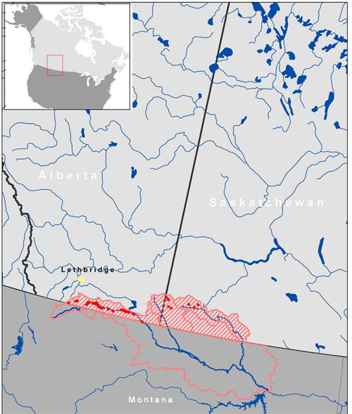 Map of the distribution of the Mountain Sucker, Milk River populations, in Canada