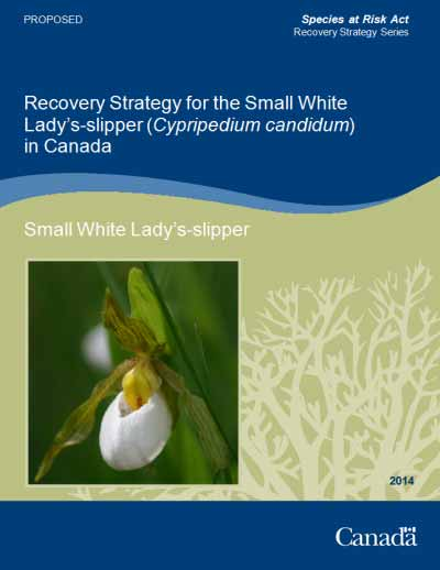 Recovery Strategy for the Small White Lady's-slipper (Cypripedium candidum) in Canada [Proposed] - 2014