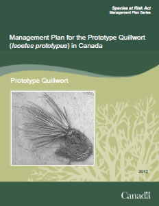Cover of the publication: Management Plan for  the Prototype  Quillwort (Isoetes prototypus) in Canada - 2012.