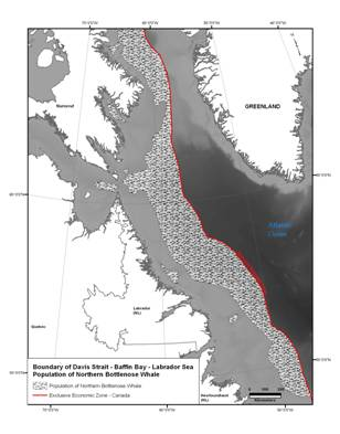 Map showing the boundary of the DS-BB-LS population of Northern Bottlenose Whale (See long description below)