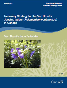 Cover page of the publication: Recovery Strategy for the Van Brunt's Jacob's-ladder (Polemonium vanbruntiae) in Canada – 2012