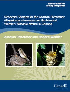 Cover of publication: Recovery Strategy for the Acadian Flycatcher (Empidonax virescens) and the Hooded Warbler (Wilsonia citrina) in Canada – 2012
