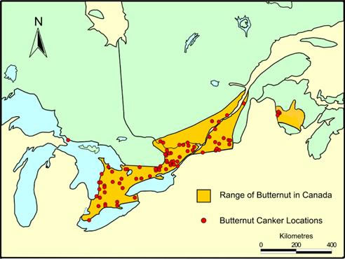 Map of Butternut range and known butternut canker locations in Canada.
