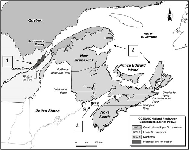 Map of the Canadian range of the Striped Bass based on COSEWIC National Freshwater Biogeographic Zones.