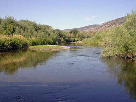 Photo of the Bonaparte River from the Highway 99 bridge, west of the junction with Highway 97 north of Cache Creek. No Olive Clubtails have been recorded at this potentially suitable location.