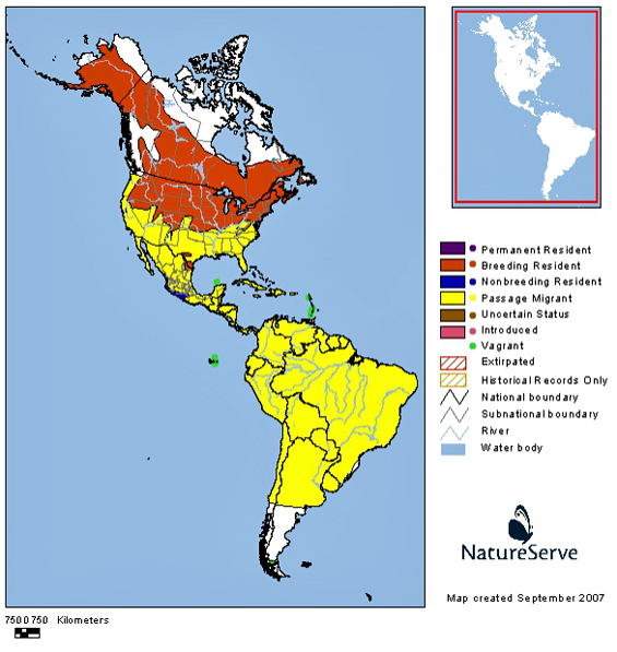 Distribution of the Bank Swallow in the western hemisphere (see long description below).