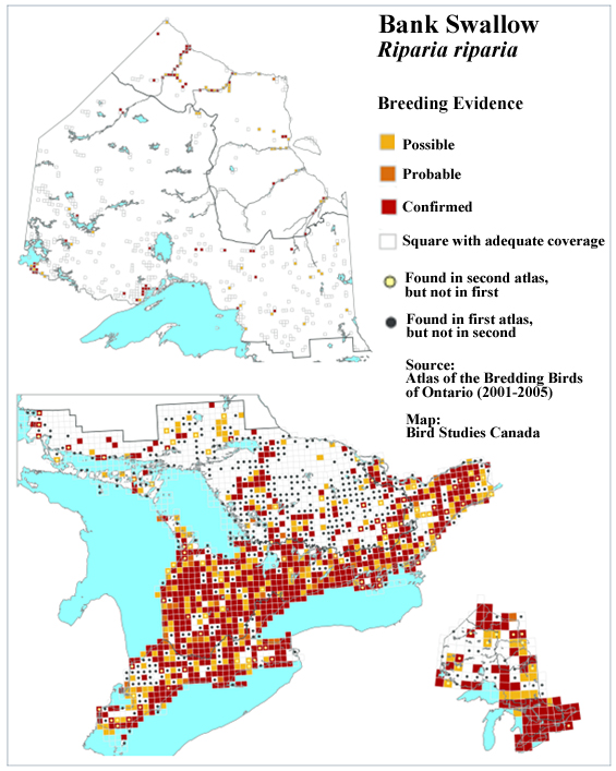 Bank Swallow distribution in Ontario during 2001-2005 (see long description below).