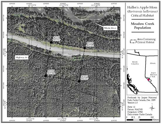 Figure 3: Location of critical habitat at Meadow Creek, Jasper National Park, AB (parcel 689_2). Refer to the text for a description of critical habitat, required habitat attributes and areas excluded from critical habitat.