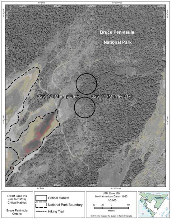 Figure 11. Fine-scale map of Dwarf Lake Iris critical habitat parcels 11 and 12 on the northern Bruce Peninsula.