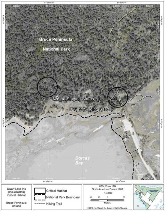 Figure 7. Fine-scale map of Dwarf Lake Iris critical habitat parcels 4 and 5 on the northern Bruce Peninsula.