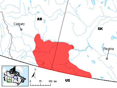 Figure 1. Distribution of Swift Fox (Vulpes velox) in Canada (Environment Canada).