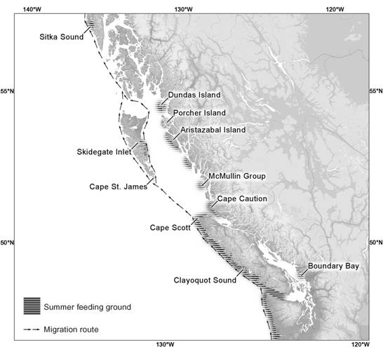 Figure 2. Map of the eastern North Pacific showing the migration route and known feeding sites of Grey Whales off British Columbia, Canada. The migration route north of Cape Scott remains poorly understood.